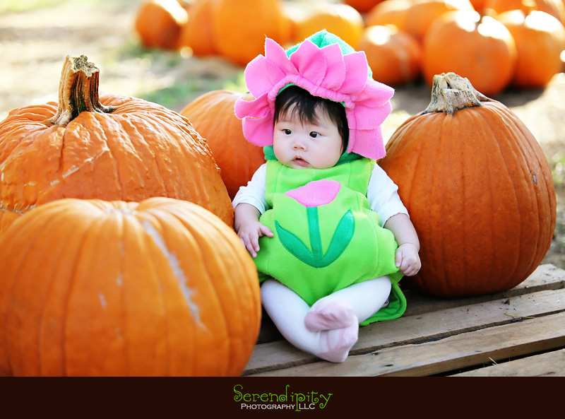 First Halloween Costume and Pumpkin Patch Experience » Serendipity ...